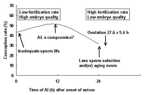 Figure 3. Artificial insemination at 12 h after onset of standing heat appears to be a compromise between the low fertilization rate and high embryo quality of early inseminations and the high fertilization rate and low embryo quality of late inseminations. (Adaptation of data from Dransfield et al., 1998, and Dalton et al., 2001, originally published by Saacke et al., 2000).