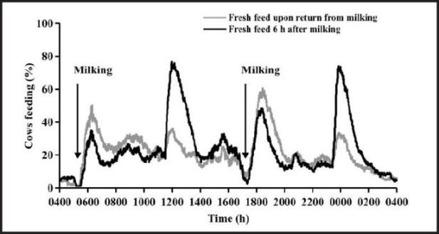 The Feeding Behavior of Dairy Cows:Considerations to Improve